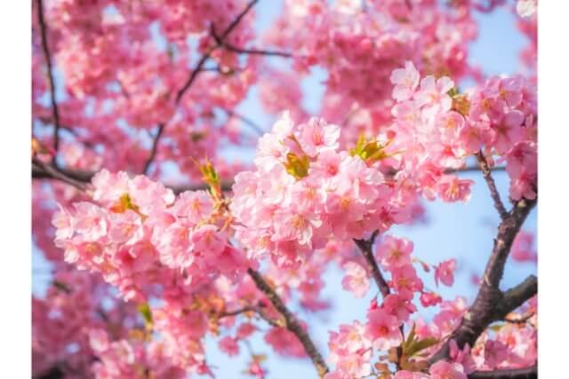 春にぴったりな生け花のアレンジ3選