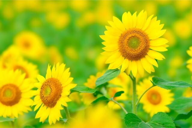生け花において大切な「構成と花の顔の向き」について