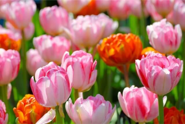北と相性の良い色と部屋ごとの花風水