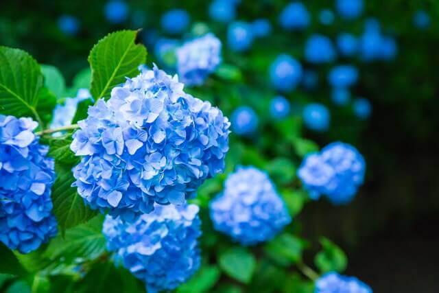 人気運や知性芸術に効く南の玄関の花風水