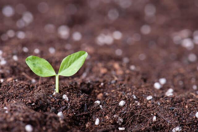 ナスタチウム、ガーデンシクラメンの育て方!カンパニュラ メディウム、浅黄水仙について